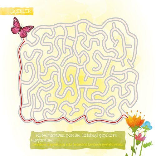 kelebek-nasil-olusur-28